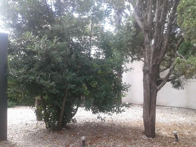 local alquiler city bell centro 27 m2 c/ patio trasero