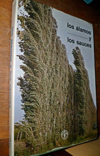 los alamos y los sauces produccion madera y tierras fao