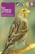 los canarios de color de gianni ravazzi
