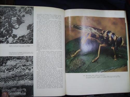 los insectos - klots