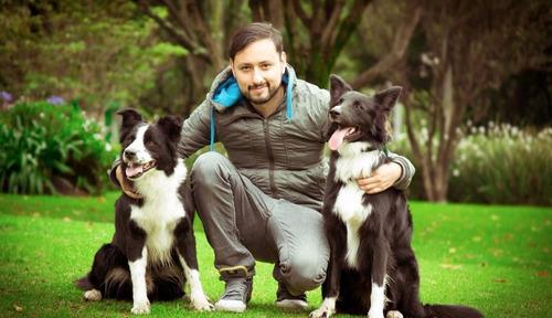 los mejores cachorros border collie del pais,
