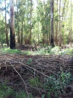 los pinos 2315m2 se escuchan ofertas de contado.