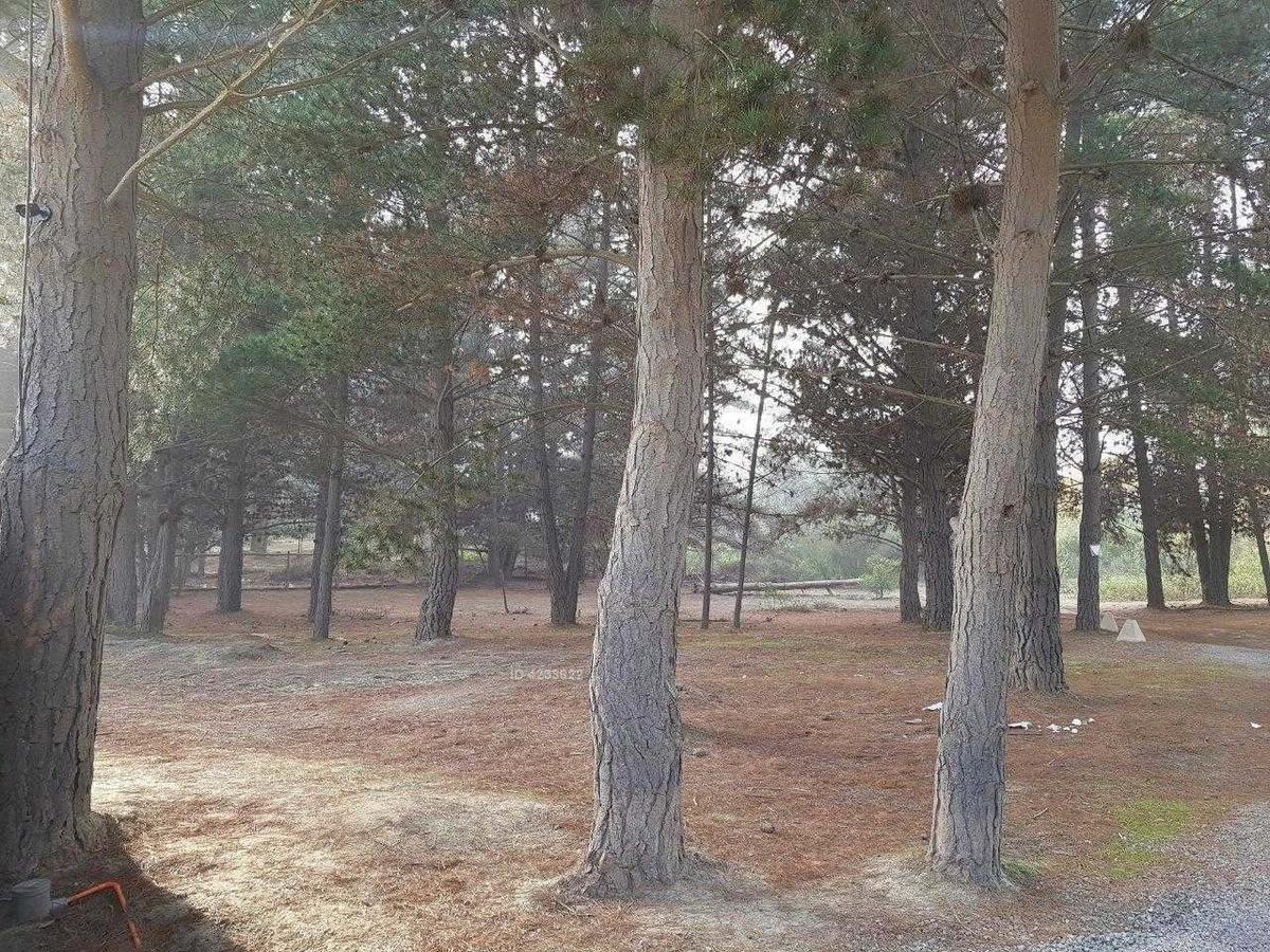 los pinos de reñaca
