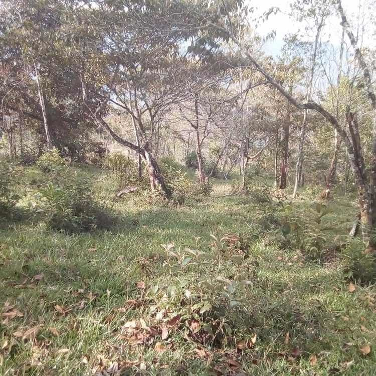 lote 5 hectáreas