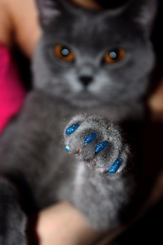 lote 6 paquetes de protectores uñas para gato envio gratis