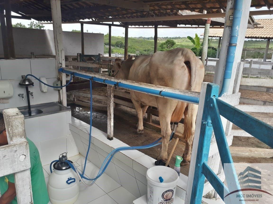 lote a venda fazenda real 3, macaíba