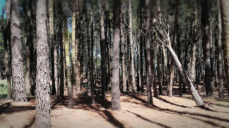 lote al bosque en venta costa esmeralda