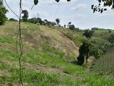 lote campestre eje cafetero