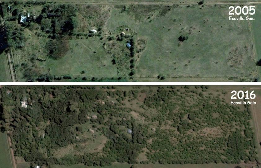 lote chacra 5000m2 vivienda / productiva orgánicos forestal