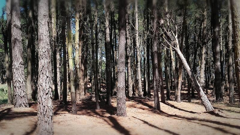 lote con pinos en venta, zona deportiva n 469 en costa esmeralda