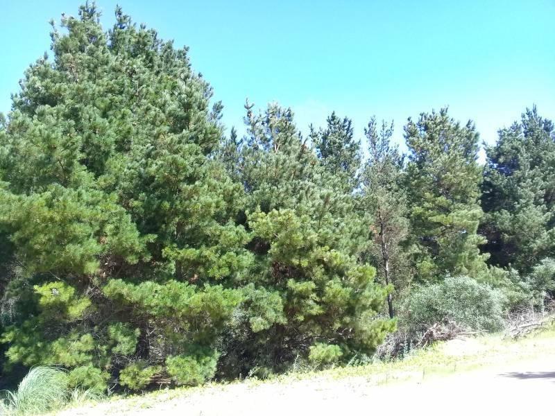 lote con pinos en venta zona senderos en costa esmeralda