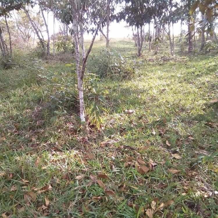 lote de 5. hectáreas