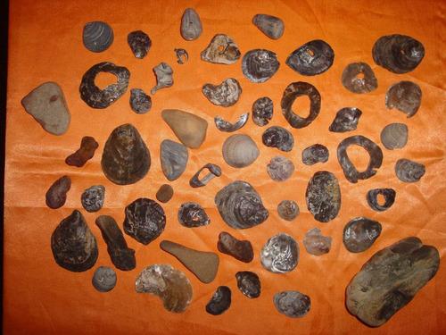 lote de caracoles para artesanias