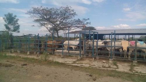 lote de ganado lechero nacido mes 07/2015