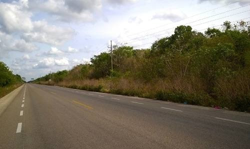 lote de rancho coba en tulum 96 hectareas