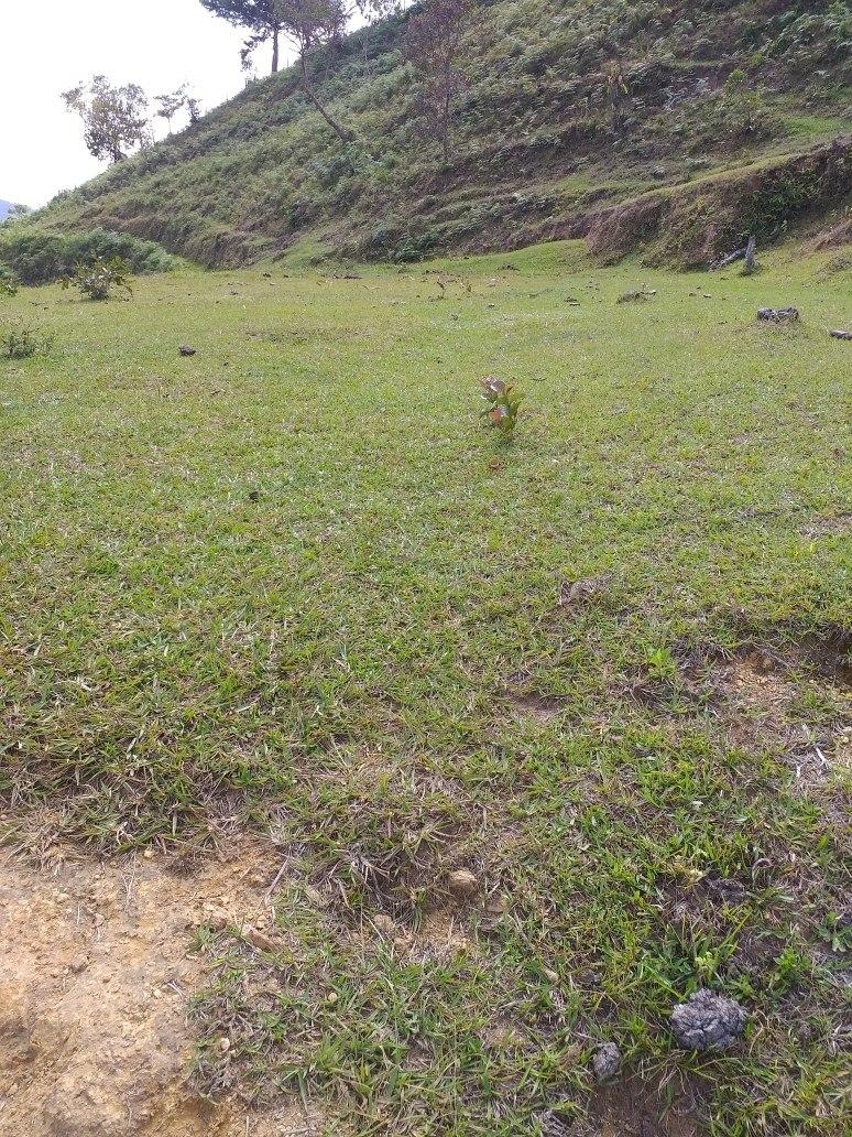 lote de terreno de 4 hectáreas.