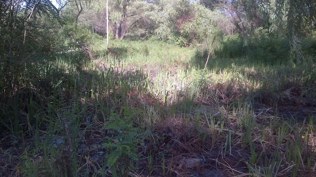lote delta tigre rio carapachay