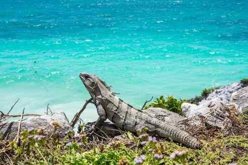 lote ecologico riviera maya