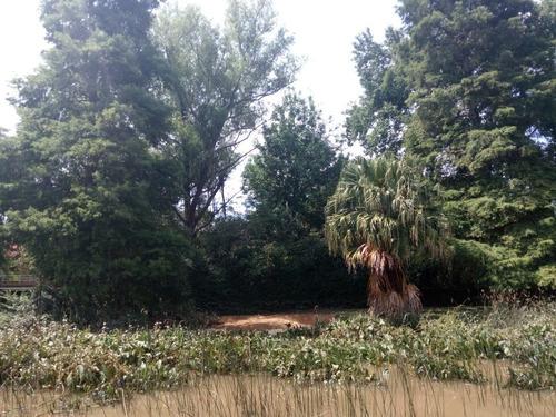 lote en el delta del tigre arroyo gutierrez