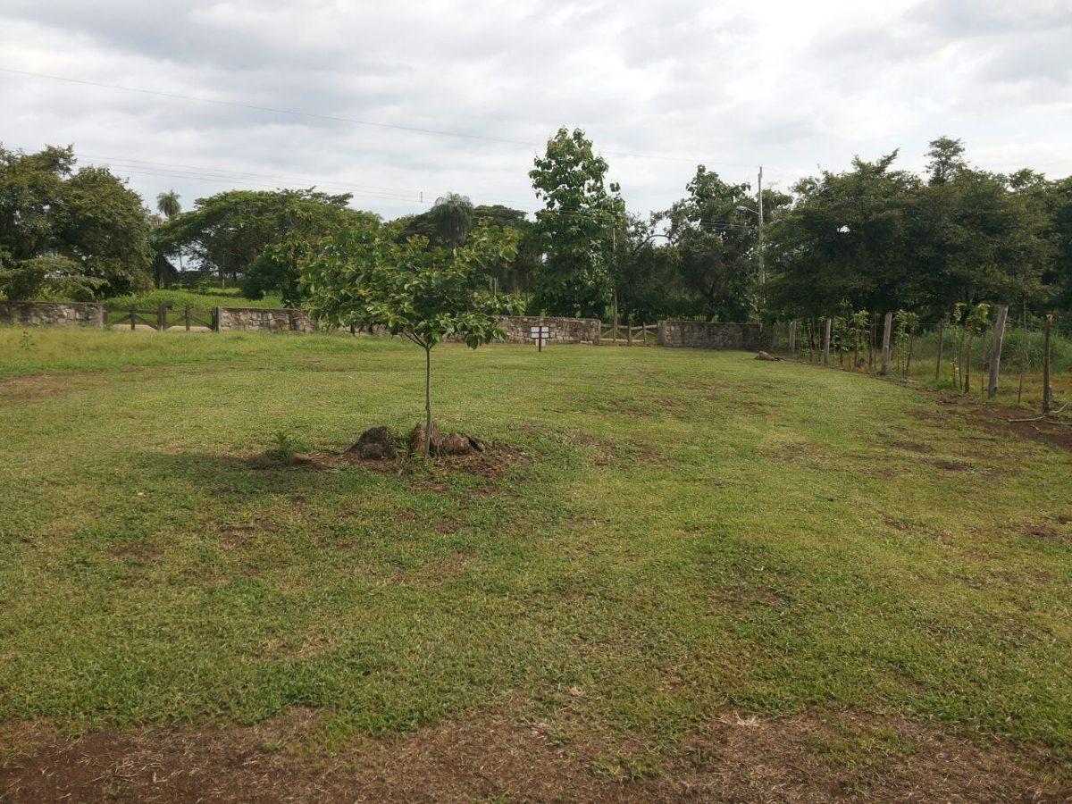 lote en orotina, trinidad vieja 556mts2
