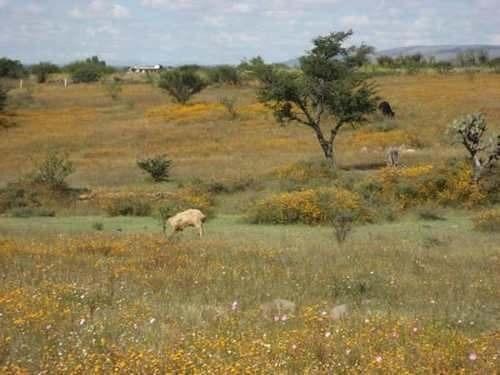 lote en venta cabras san miguel de allende