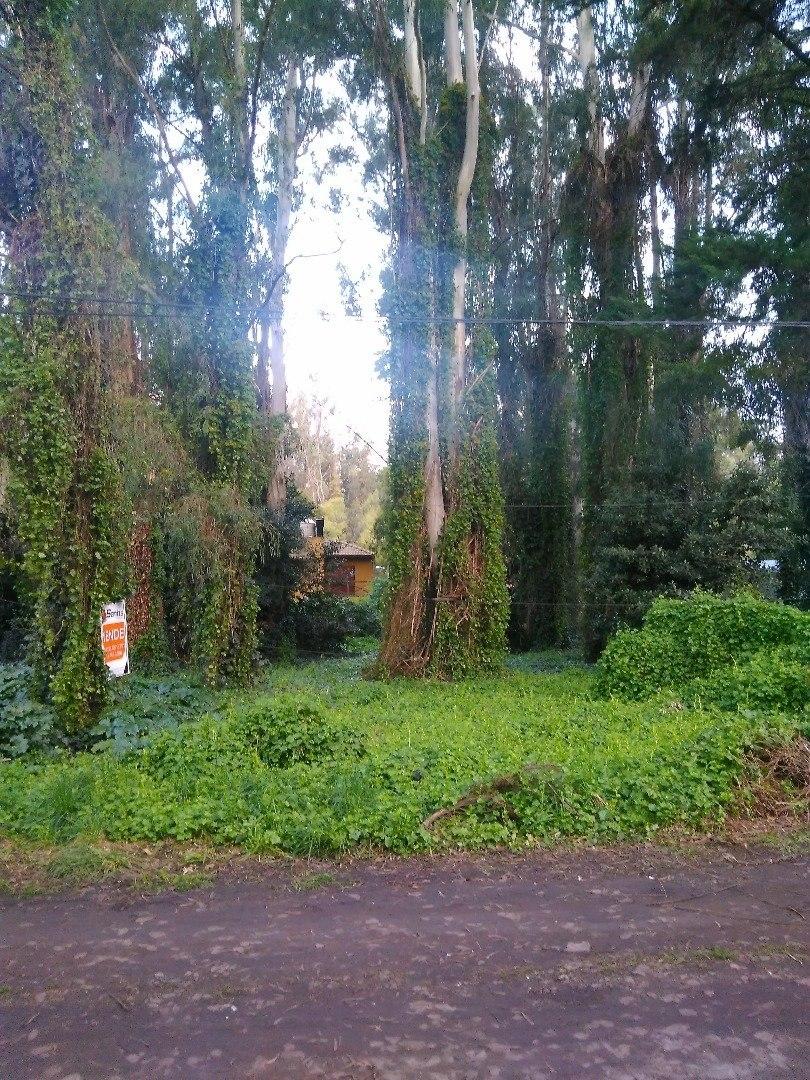 lote en zona de bosque denso.