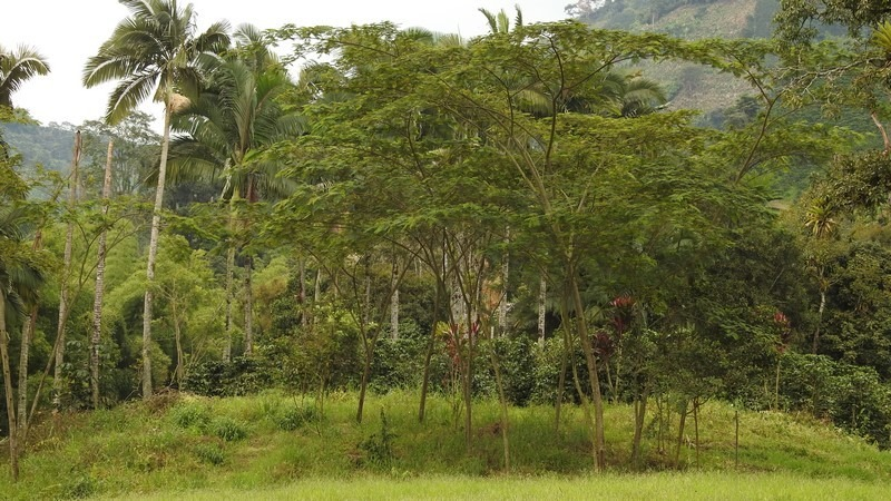 lote terreno 32.000 m2 chinchiná cerca vía pereira manizales