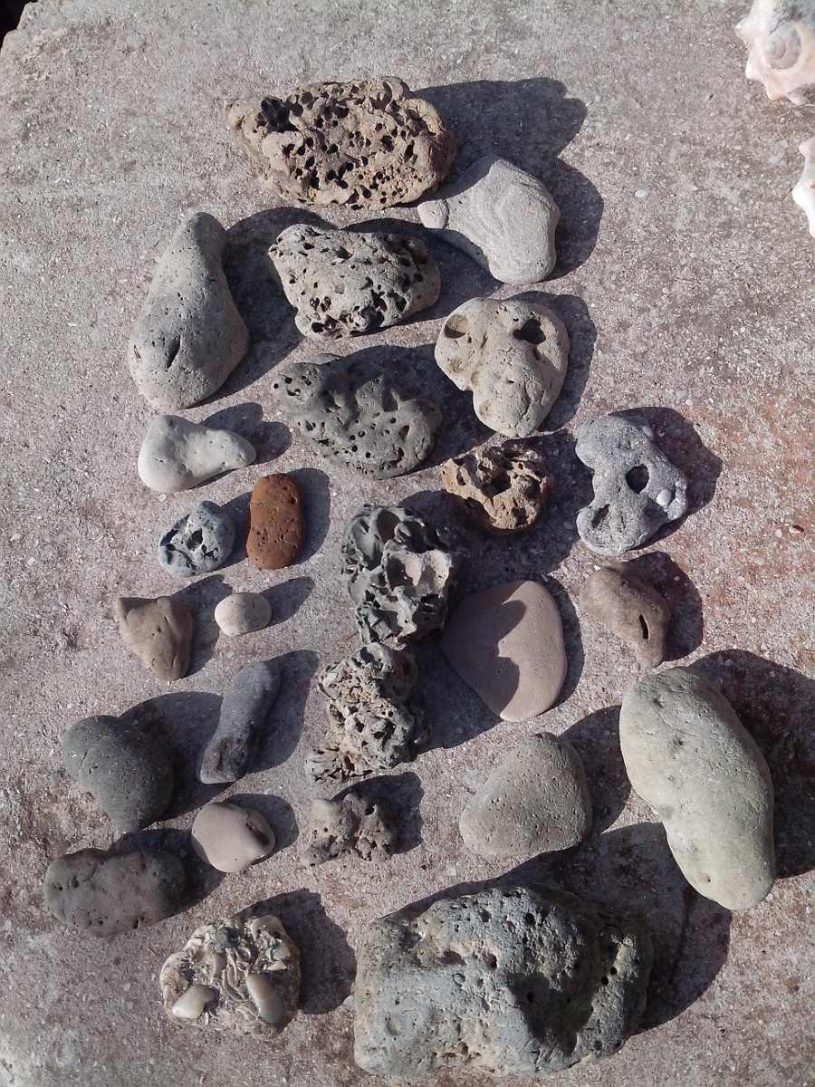 lote x caracoles y piedras para decoracion acuario marino