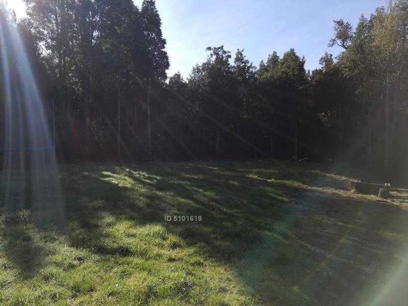 loteo el bosque n / a