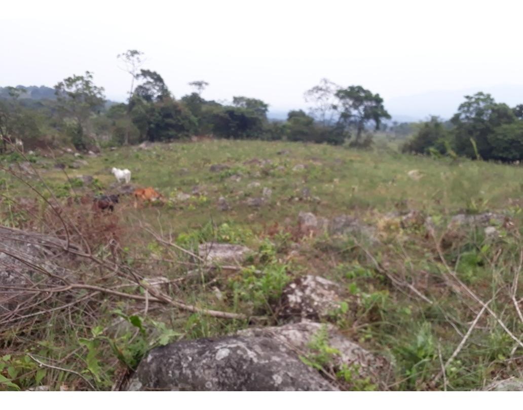 lotes de 1 a 6 hectareas en cubarral