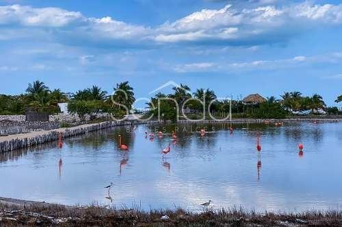 lotes de inversión a solo 2 minutos de las playas de santa clara yucatán