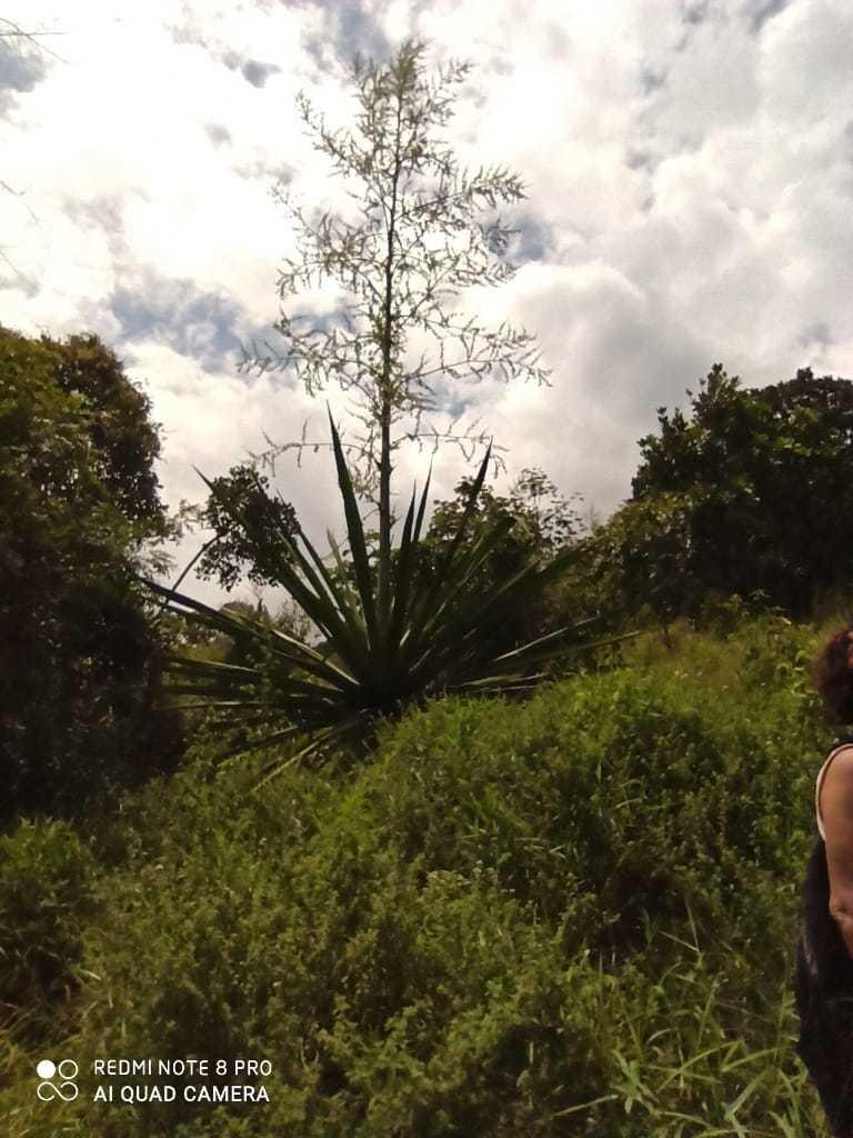 lotes desde 250 metros entre floridablanca y piedecuesta
