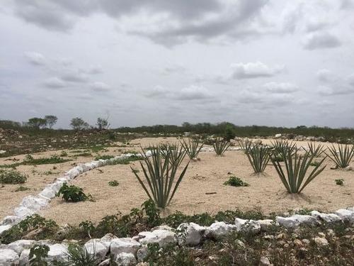 lotes residenciales en yaxkukul yucatán