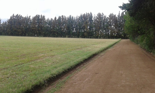 lotes terrenos en san pedro, campos del parana
