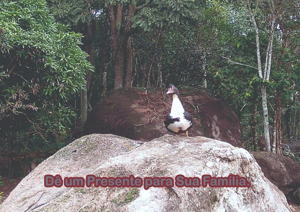 l.s um bom lugar para descansar terrenos em ibiuna sp