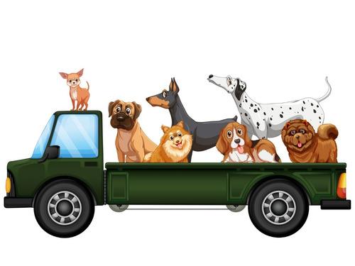 lsvet traslado de mascotas