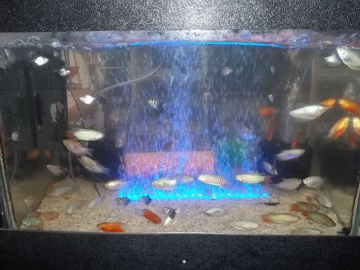 luces led para acuario en todos los colores en