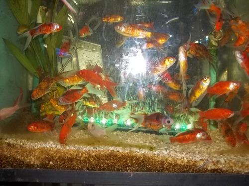 luces led para acuario en todos los colores
