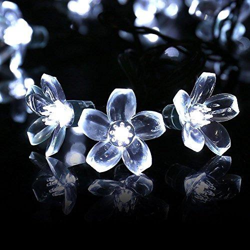 luces solares de la secuencia de la flor de cereza de qedert