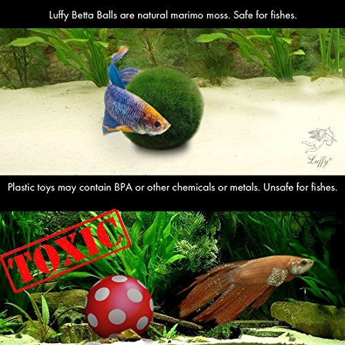 luffy betta balls live en forma de planta marimo juguetes n
