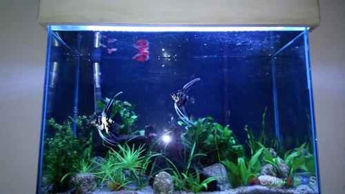 luminária para aquário fita led rgb 5050 1 metro