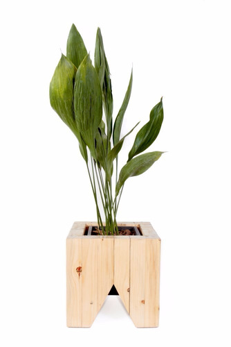 maceta bruce madera pino brasil interior [bror]