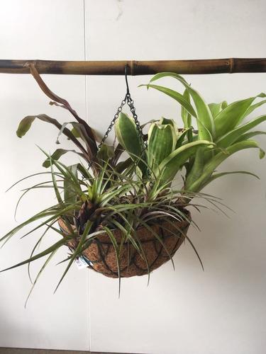maceta colgante fibra de coco 35 cm bromelias orquideas