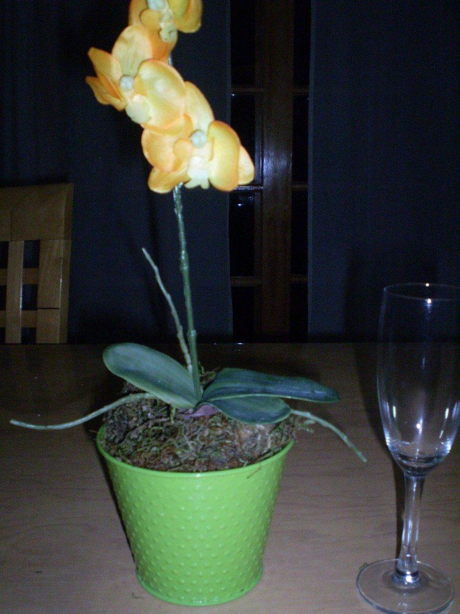 Maceta con orquidea en mercado libre - Maceta para orquidea ...