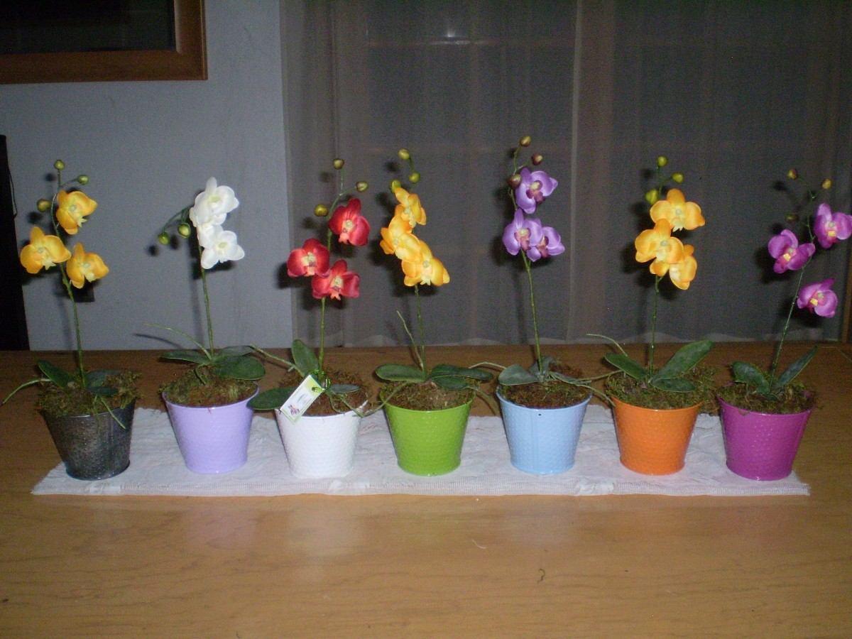 Maceta con orquidea en mercado libre - Maceta para orquideas ...