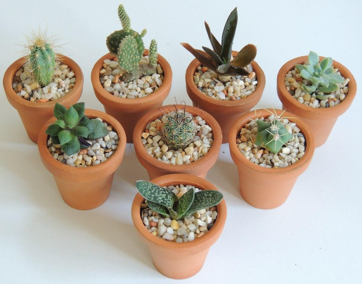 Maceta de barro 5cm cactus plantas suculentas miniatura for Como plantar cactus
