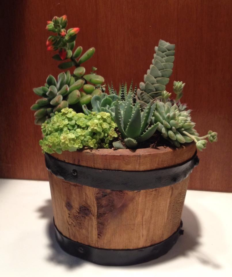 Maceta de barro en triciclo de metal y plantas atractivas for Fotos de plantas en macetas