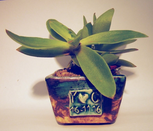 maceta de cerámica con suculenta o planta - centro de mesa!