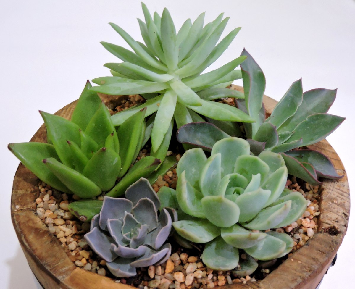 Maceta de madera con plantas f ciles de cuidar suculentas - Plantas de exterior faciles de cuidar ...