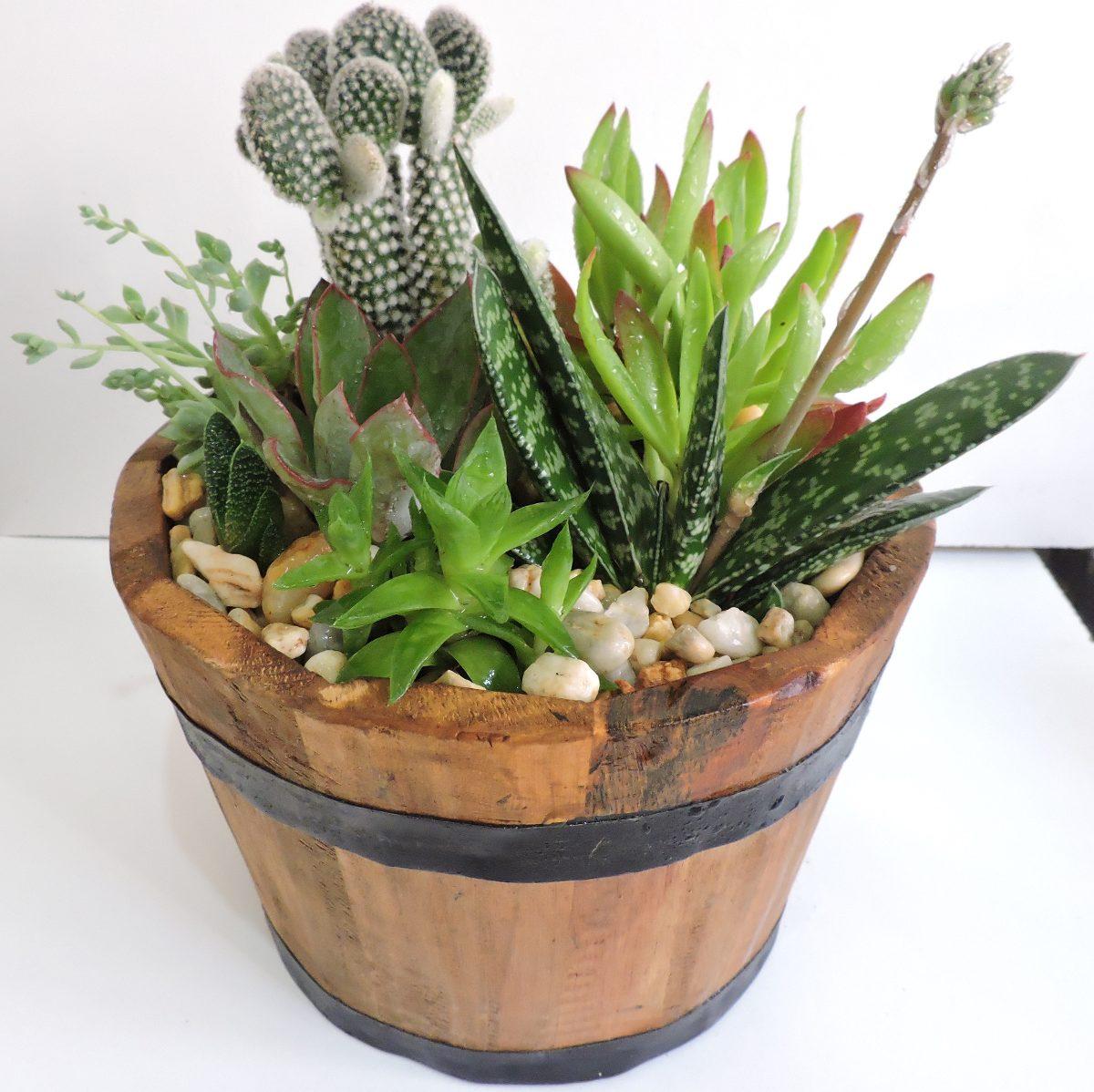 Maceta de madera con plantas suculentas o cactus 250 - Cactus en macetas pequenas ...